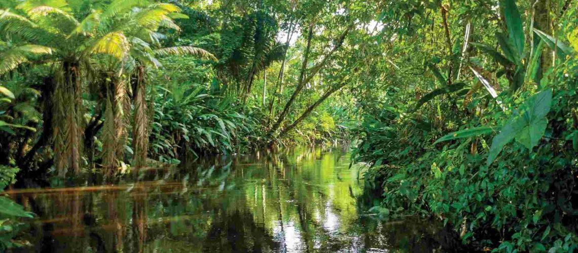 ecuador-amazon-jungle-river.jpg